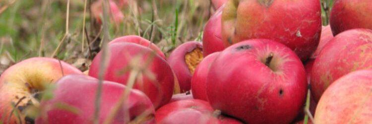 nucsoara, mere, apple_1a, 2017
